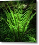 Magic Fern Metal Print