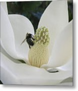 Magnolia Honey Metal Print