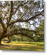 Magnolia Plantation Live Oak Sunrise Metal Print
