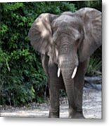 Majestic African Elephant Metal Print