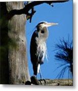 Majestic Great Blue Heron Metal Print