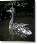 Mama Duck Metal Print
