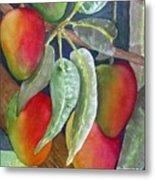 Mango One Metal Print
