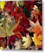 Maple Leaf Colors Metal Print