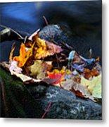 Maple Leaves-0004 Metal Print