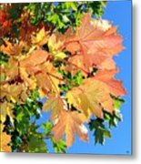 Maple Mania 1 Metal Print