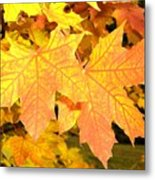 Maple Mania 2 Metal Print