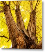 Maple Tree Portrait 2 Metal Print