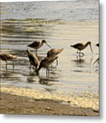 Marbled Godwit Birds At Sunset Metal Print