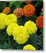 Marigold And Zinnias Metal Print