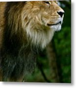 Master Of The Kingdom Metal Print