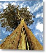 Mayflies On The Eucalyptus Viminalis Metal Print