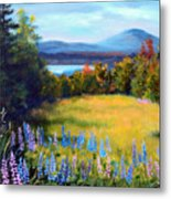 Meadow Lupine II Metal Print by Laura Tasheiko