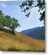 Meadow View Summer Metal Print