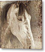 Meet The Andalucian Metal Print by Meirion Matthias