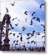 Mexican Pigeon Ruins Metal Print