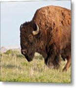 Mighty American Bison Metal Print