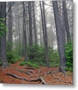 Misty Morning In An Algonquin Forest Metal Print