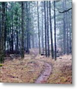 Misty Morning Trail In The Woods Metal Print