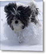 Misty Runs Through The Snow Metal Print