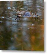 Mixed Frogs Hands Up Metal Print
