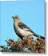 Mockingbird . 7682 Metal Print by Wingsdomain Art and Photography