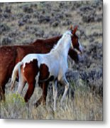 Mom And The Filly Leaving Metal Print