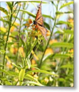 Monarch Is Indeed King Of The Butterflies Metal Print by Dustie Meads