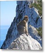 Monkey In Gibraltar Metal Print