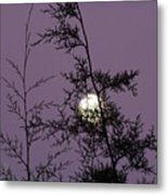 Moon Trees Metal Print