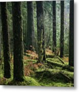 More Tree Trunks And Ferns Metal Print