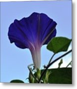 Morning Glory Sky Metal Print