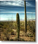 Morning In The Sonoran Desert Metal Print