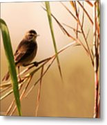 Morning Light Warbler Metal Print