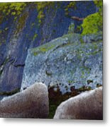 Moss And Rocks Metal Print by John Daly