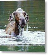 Mossy Moose Metal Print