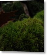 Mossy Wood 002 Metal Print