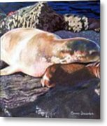 Mother And Child Sea Lion Metal Print