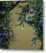 Mother Nature's Tears Metal Print