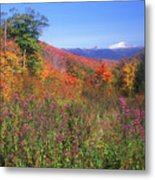 Mount Washingon Flowers Foliage Metal Print