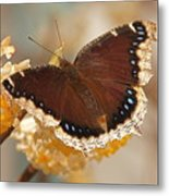 Mourning Cloak Butterfly Metal Print