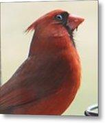 Mr Cardinal Metal Print by Maxine Billings