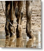 Muddy Reflections.. Metal Print