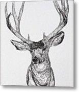 Mule Deer Buck Metal Print