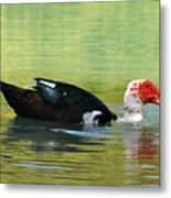 Muscovy Red Metal Print