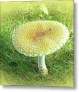 Mushroom - Amanita Muscaria Guessowii  Metal Print