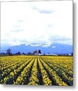 Myriads Of Daffodils Metal Print