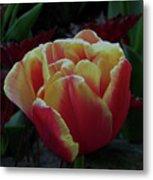 Mysterious Tulip Metal Print