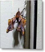 Mysterious Visitor Metal Print