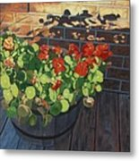 Nasturtiums In Late Light Metal Print